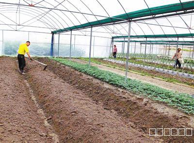 大棚蔬菜种子及土壤消毒杀菌—新型农业杀菌剂