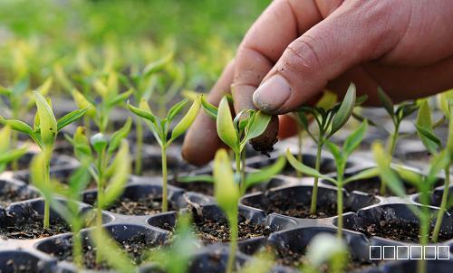 育种育苗过程中种子和土壤如何龙8国际最新官网杀菌?